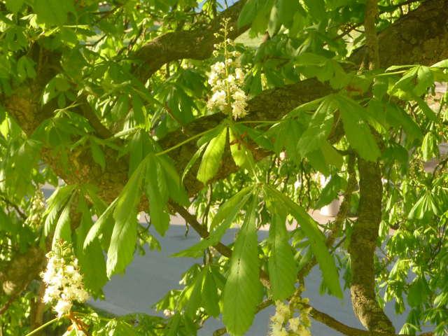 chestnut_0423